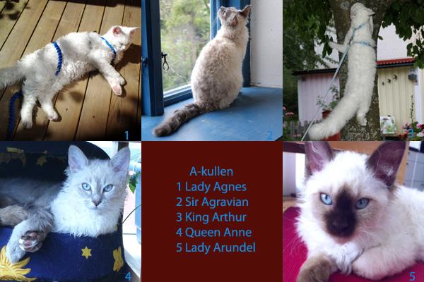 Alla katter i A-kullen