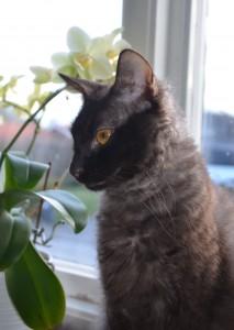 Ginny-Profil-Fönster